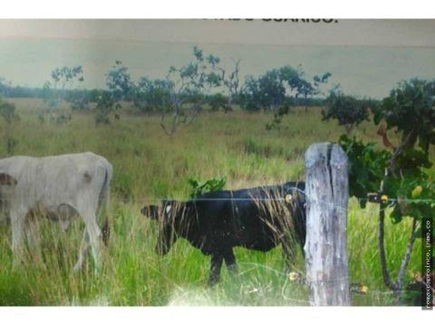 tierras para engorde de ganado en guarico