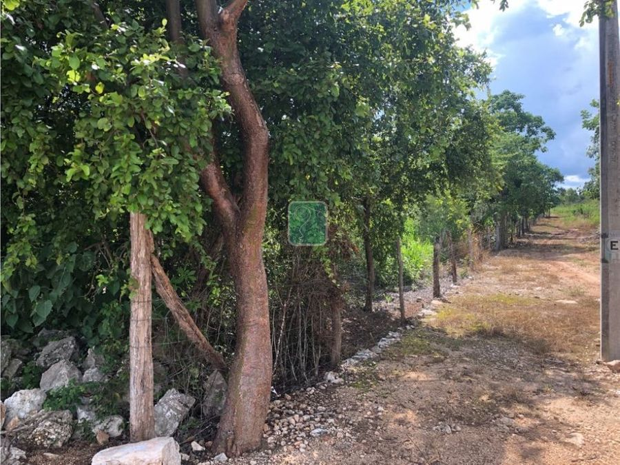 una hectarea en venta con arboles frutales
