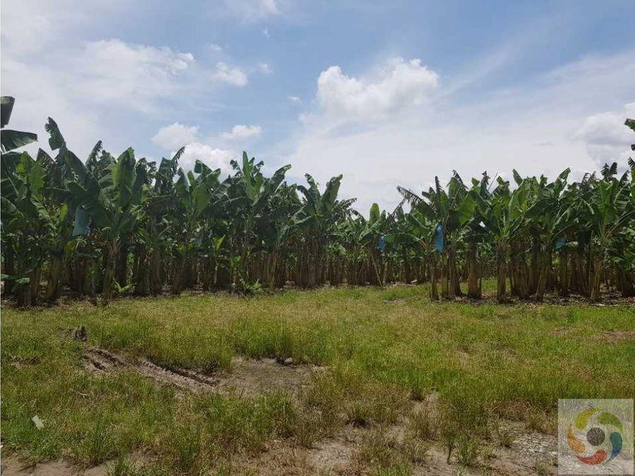 vendo finca cultivada en banano