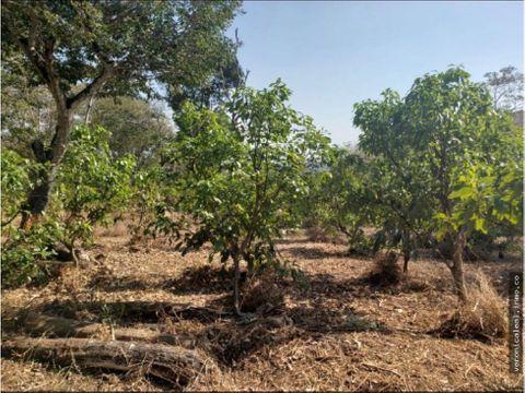 35 manzanas terreno km48 santa elena barillas jocotillo