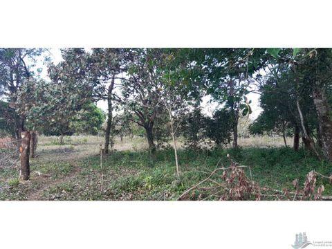 vendo terreno de 3 hectareas en el frances abajo