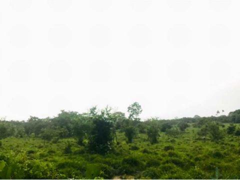 vendo 119 hectareas de terreno via gualaca