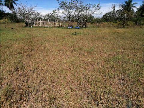 vendo 11 hectareas de terreno en alanje