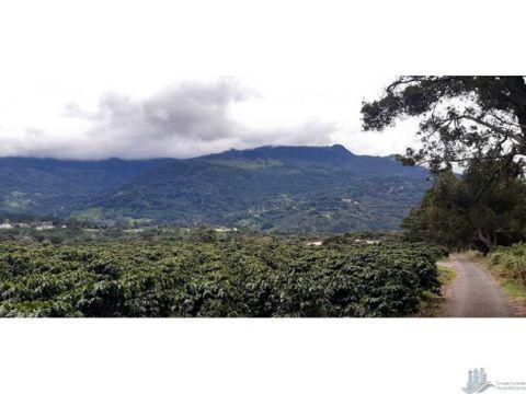 vendo 31 hectareas con cafe