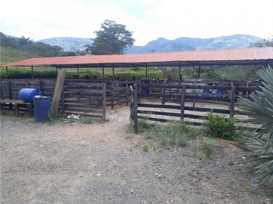 venta de finca tulua valle