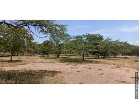 venta de 85 hectareas en vereda cerca de san diego cesar 02