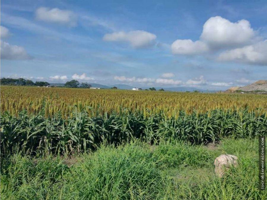 6 hectareas en cuautla morelos