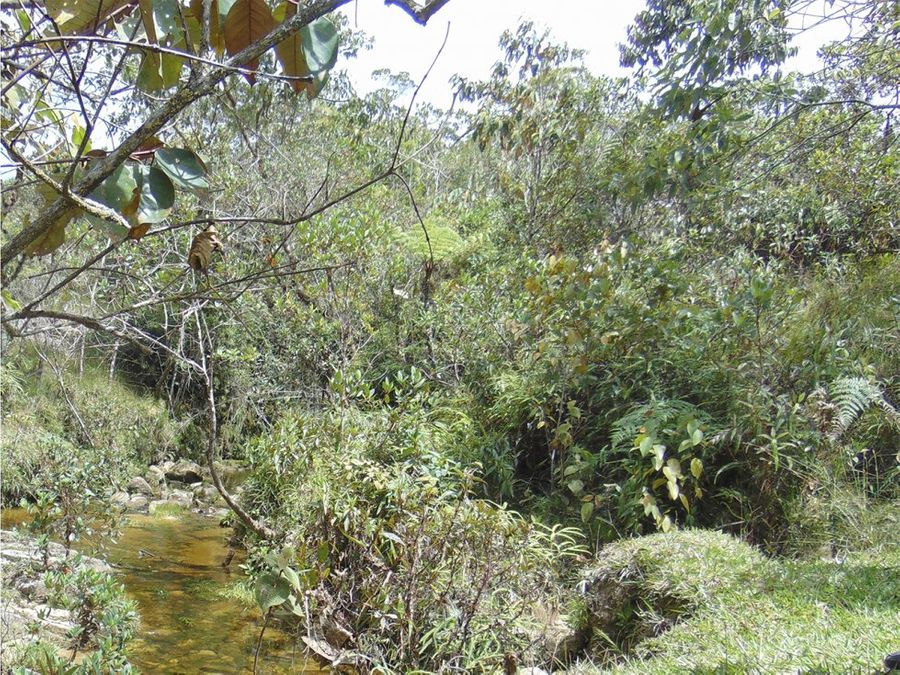 80 cuadras a 12 km represa guatape via alejandria
