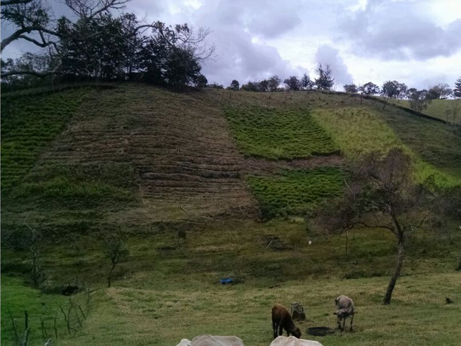 finca productiva 144 km de guarne vereda ovejas