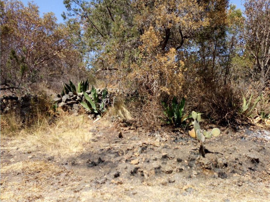 venta de terreno en tetla 185 hectareas