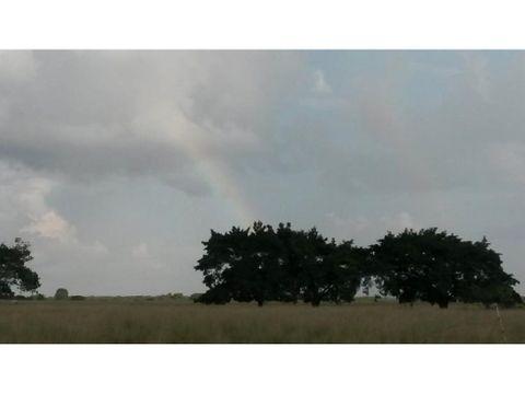 venta rancho el marino 82ha campo alto balancan