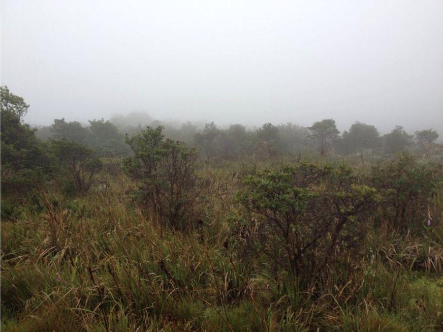 se vende finca 272 hectareas guasca