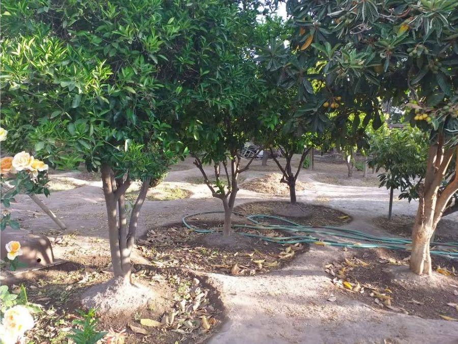 venta terreno 2127m2 con arboles frutales y casa 3d 1b santa maria