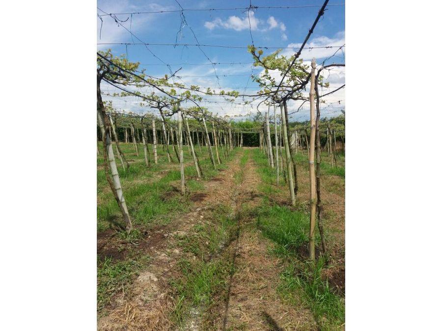 se vende finca productora de uva toro valle