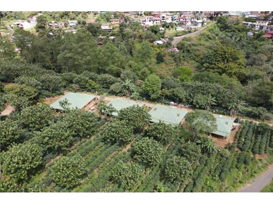 se vende finca sembrada de cafe en naranjo