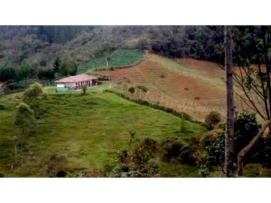 finca lote mediano apto para aguacate hass