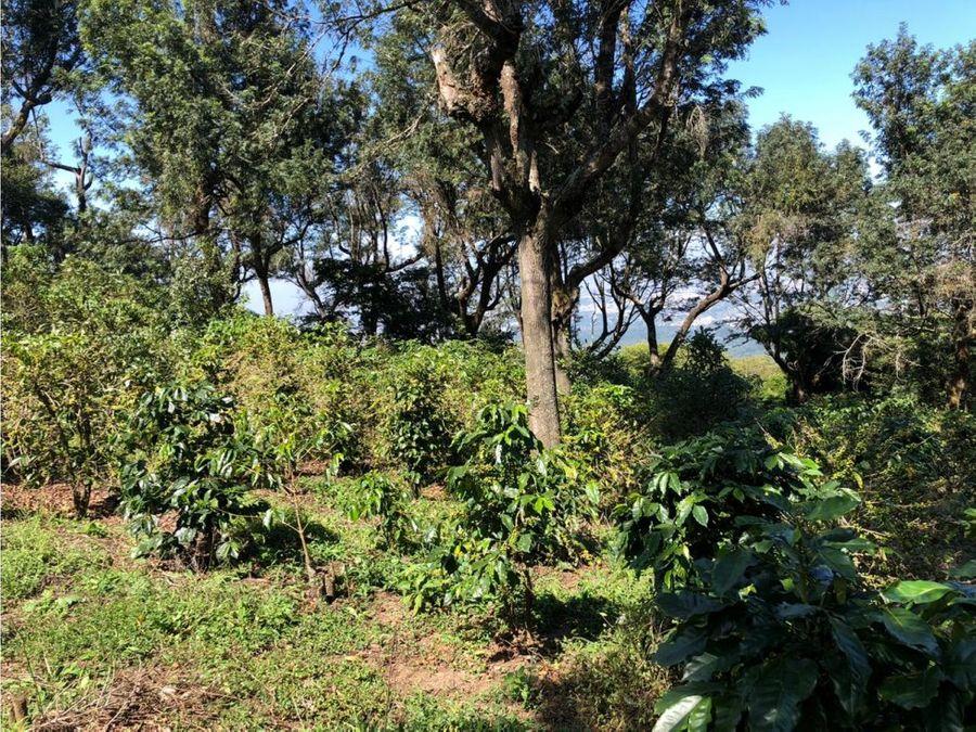 vendo 20 manzanas entre aldea chichimecas