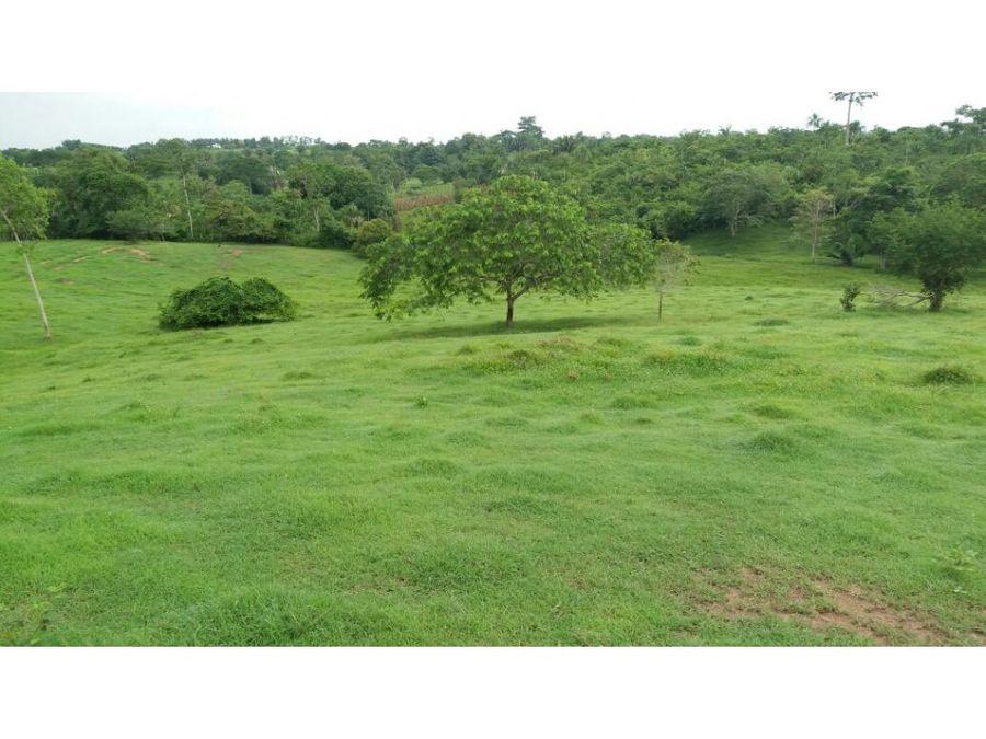 vende finca de 90 hectareas en sahagun cordoba