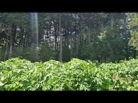 magnifico lote en san jose de la montana