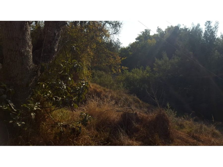 valparaiso limache vivero limache