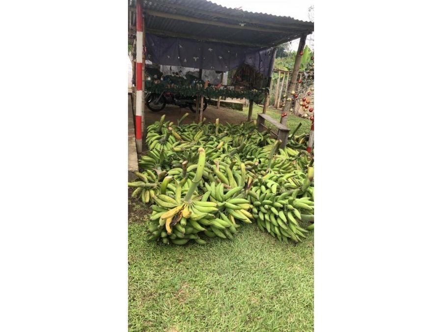 venta finca vereda santana quimbaya