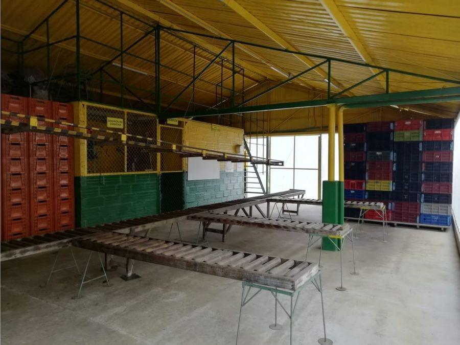 finca productiva de aguacate en marinilla con excelentes instalaciones