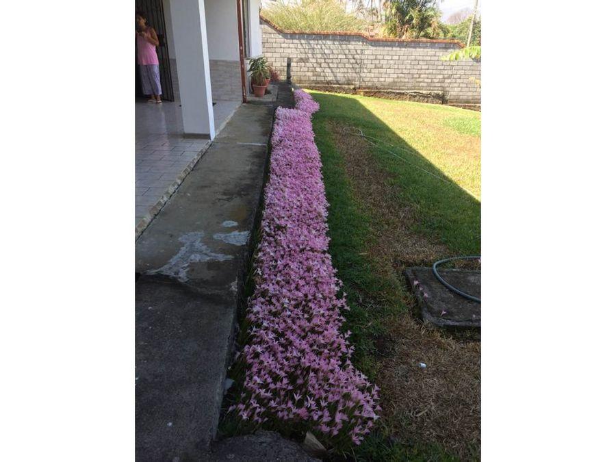 se alquila casa independiente flores heredia hv