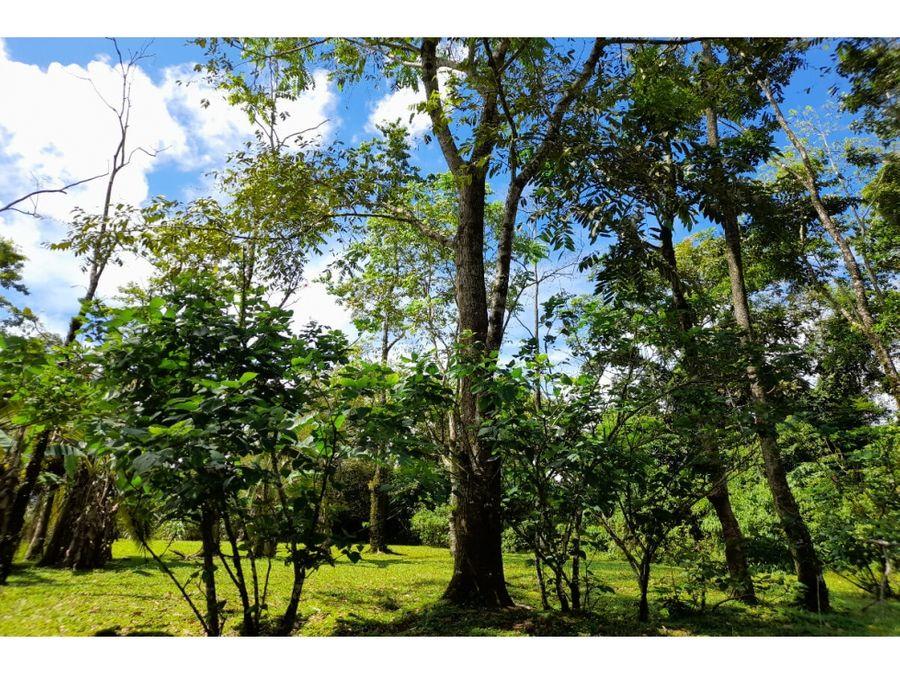 en venta finca de 9 hectareas en la isleta de guacimo