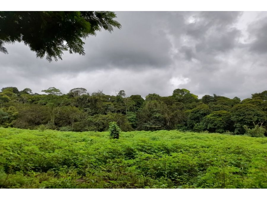 venta de finca en guacimo limon 14 hectares 3459 acres
