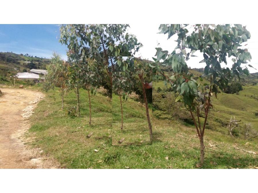 finca en venta en entre los municipio de cocorna y granada