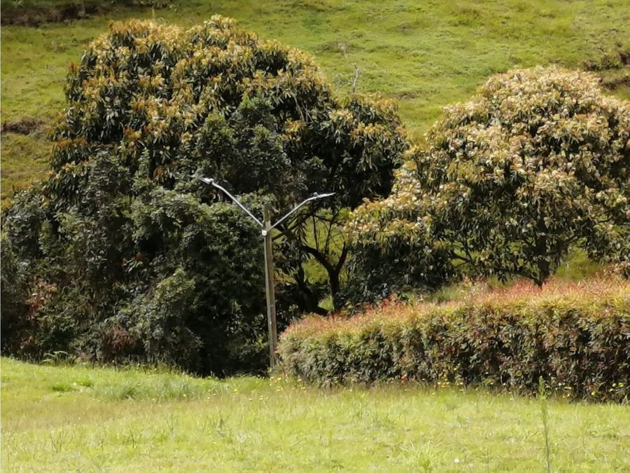 venta lote parcelacion la selva carmen de viboral