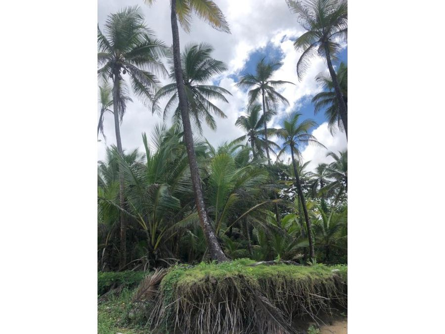 terreno en palenque
