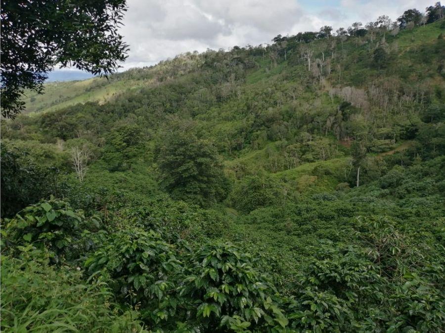 oportunidad de inversion finca cafetera en produccion chiriqui
