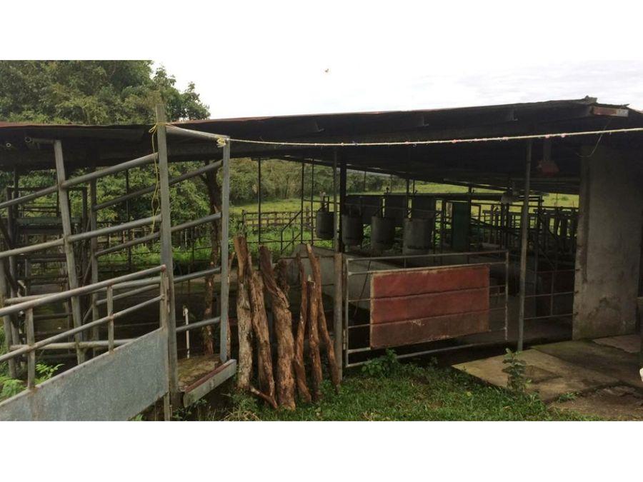 se vende finca lechera en produccion en chiriqui