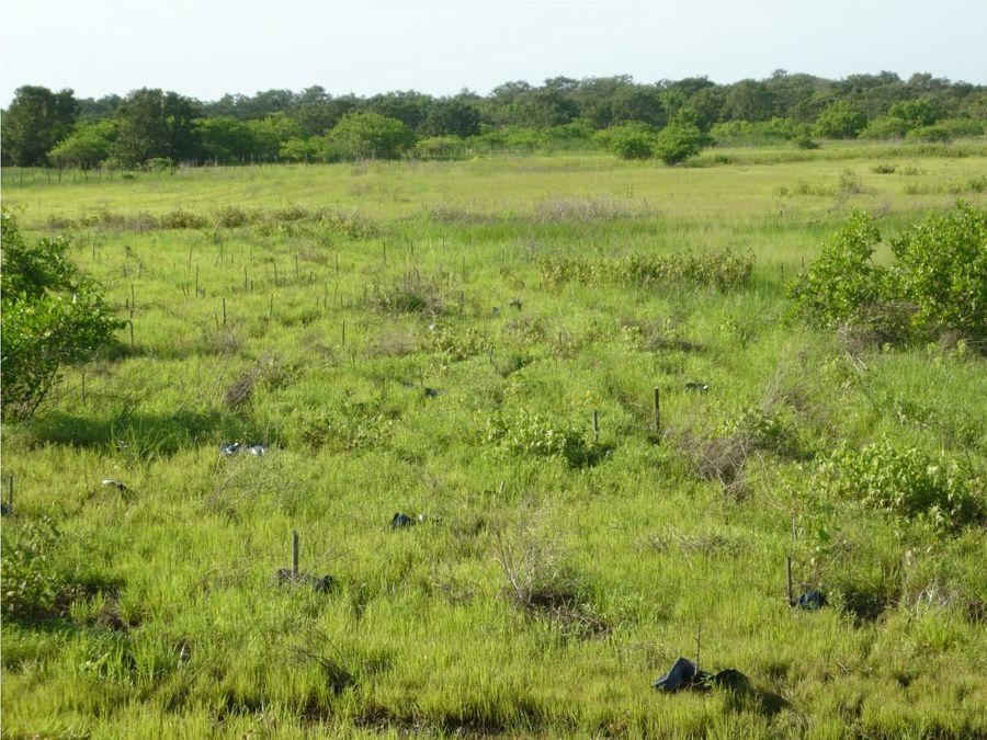 terreno 29 3 hectareas plano listo para siembra