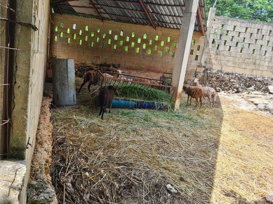 se vende rancho 8 hectareas en tahmek