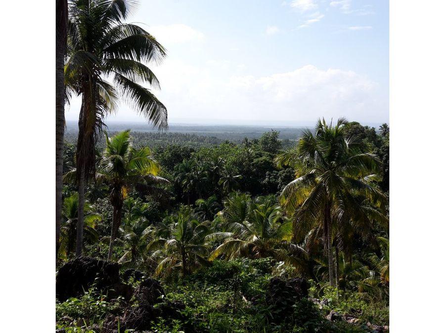 finca de cacao y coco en sanchez 337 tareas