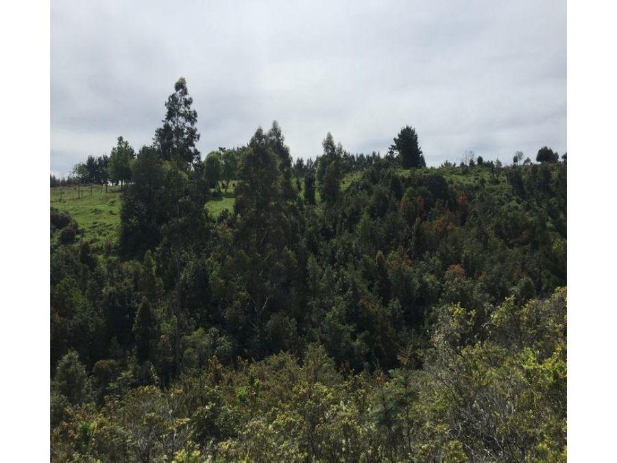 terrenos con hermosa vista en la costa de valdivia