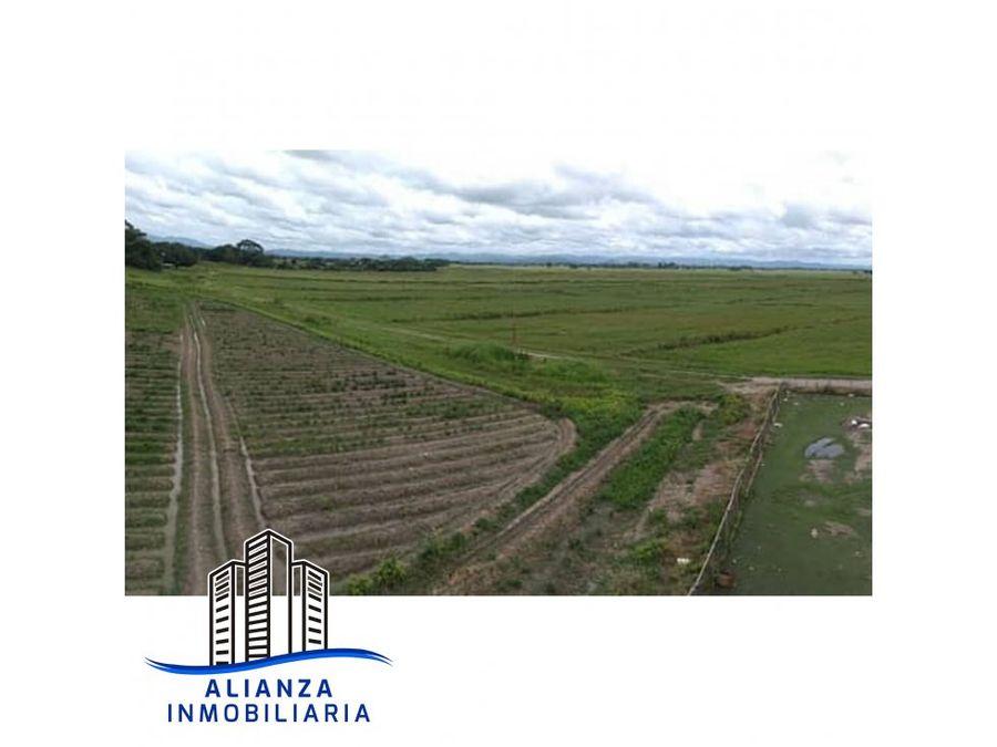 finca de 125 hectareas en las majaguas edo portuguesa