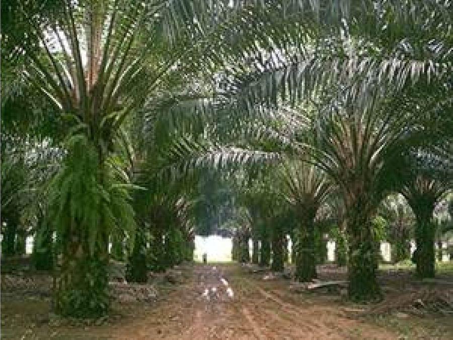 magnifica finca palmera muy cerca a san carlos