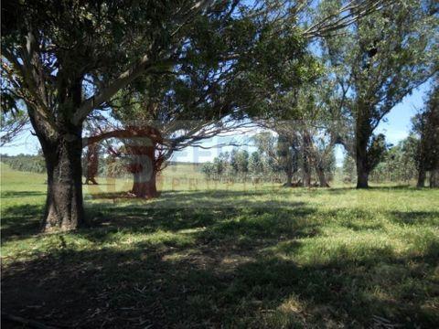 campo ganadero 73 hectareas en florida el arrayan