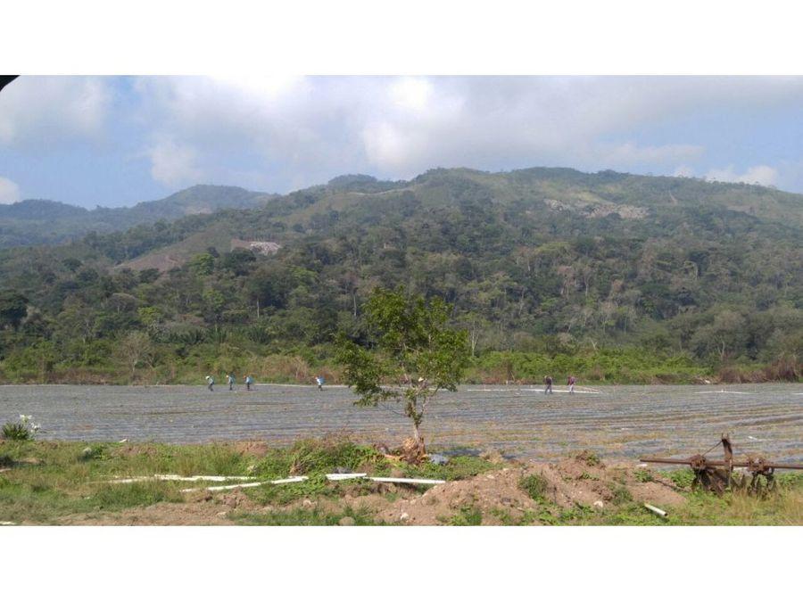 se vende terreno en pito solo lago de yojoa