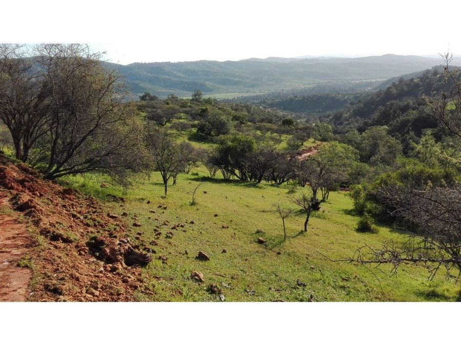 venta lote 403 hectareas ruta lo orozco quilpue