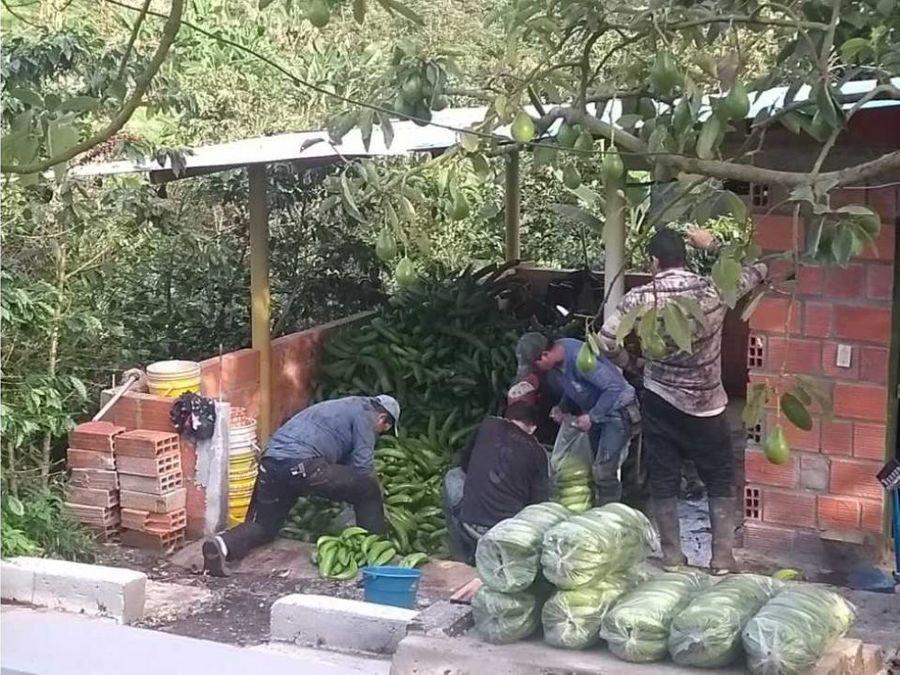 venta finca productiva 8 hectareas palocabildo tolima